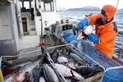 Fiskfråfjorden 1