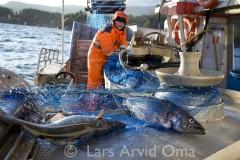 Fiskfråfjorden 4