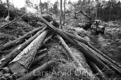 Skogsdrift 8