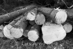 Skogsdrift 11