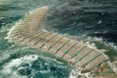 Kolmulefiske i Atlanterhavet 3