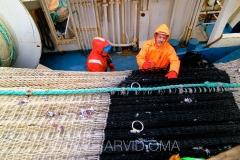 Kolmulefiske i Atlanterhavet 5