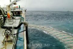 Kolmulefiske i Atlanterhavet 6