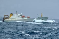 Kolmulefiske i Atlanterhavet 10