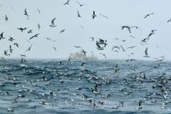 Kolmulefiske i Atlanterhavet 11