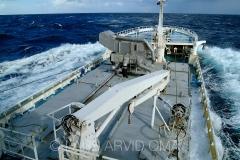Kolmulefiske i Atlanterhavet 13
