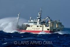 Kolmulefiske i Atlanterhavet 14