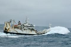 Kolmulefiske i Atlanterhavet 15